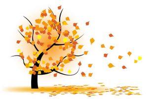 autumn-tree-wind
